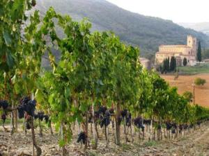 Brunellosantantimo-and-vineyard